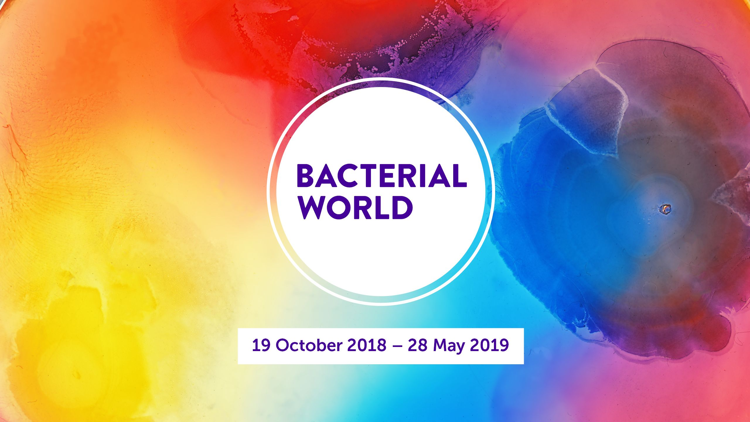 bacterial world