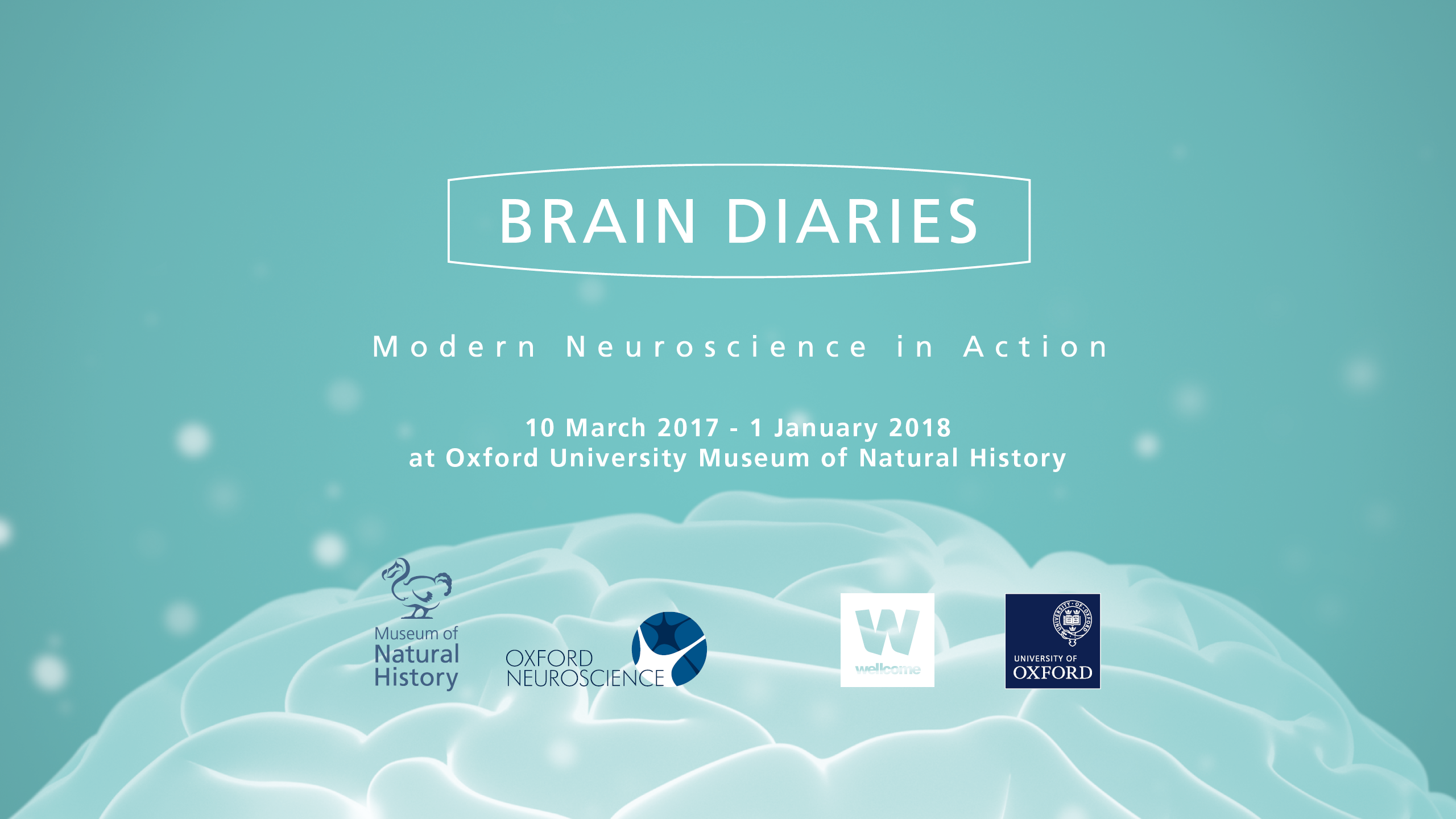 Brain Diaries Modern Neuroscience In Action Cool Circuits Puts Your Muscle To The Test Neuroscienceoxacuk