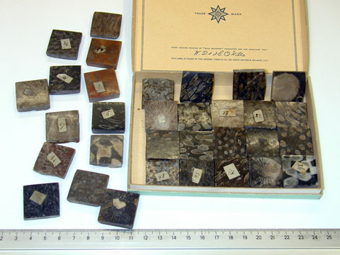Tiny polished specimens of                                         different coral limestones in a cigarette box. The history                                         of this collection is not known.
