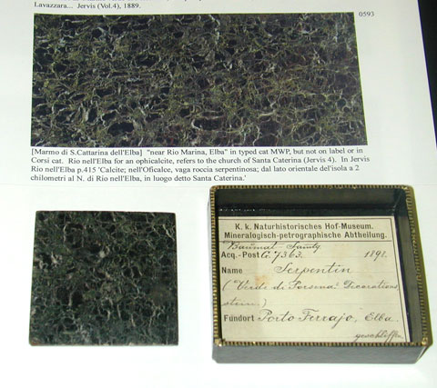 A specimen in the Vienna collection (below) and Corsi's specimen (above) confirm Corsi's identification.