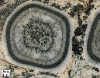 Circular banding in an orbicular granite