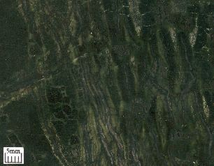 Reticulated (net-like) array of veins in serpentinite