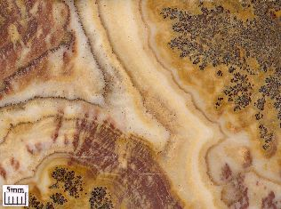 Dendrites in a travertine