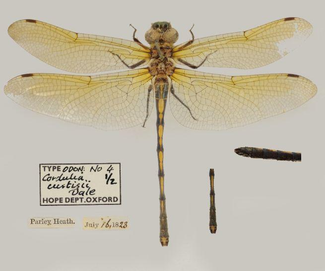Image of specimen