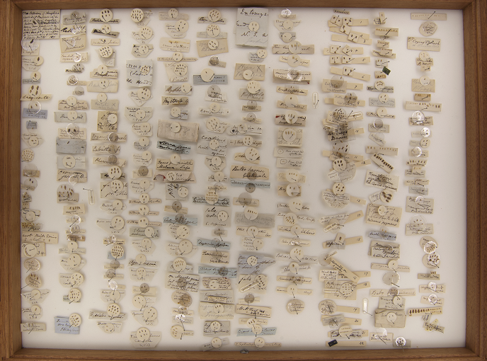 One of the drawers of the Denny collection