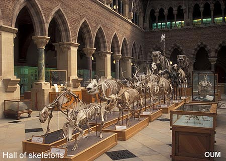 Oxford Museum Of Natural History Learning Zone