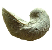 bivalve dating View free background report & reputation score (380) for daniel disharoon in bivalve, md - see address, 2 phones, email  dating websites, .